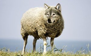 Loup et agneau